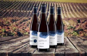 Pinots noirs du domaine Queylus à Niagara